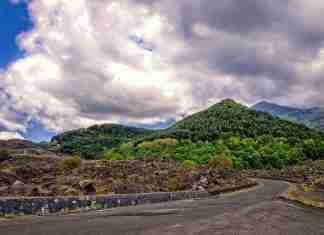 Bosco sull'Etna